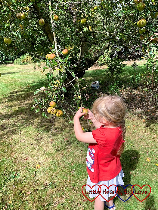 Sophie picking apples from the tree in Grandma's garden
