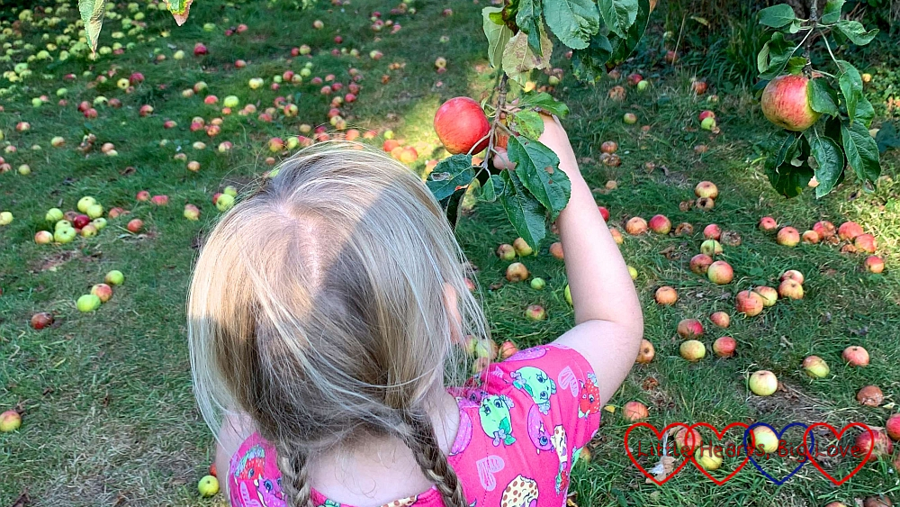 Sophie picking red apples from a tree