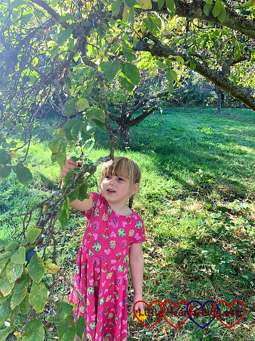 Sophie picking apples in Grandma's garden