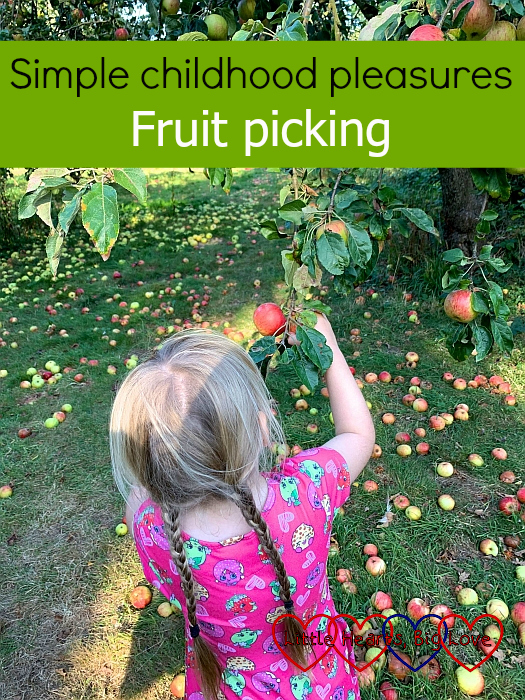 "Sophie picking red apples from a tree - ""Simple childhood pleasures - fruit picking"""