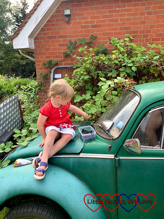 Sophie sitting on Daddy's old Beetle, picking blackberries