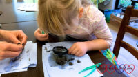 Sophie looking closely at an owl pellet through a magnifying glass