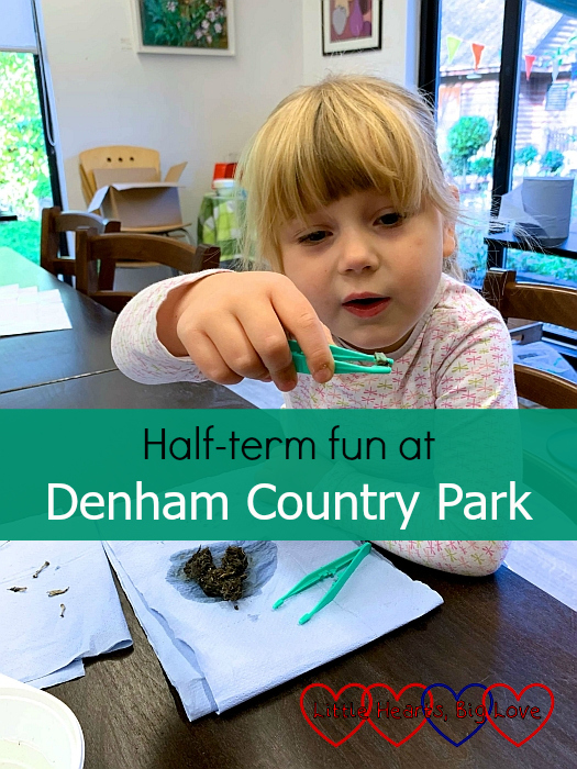 "Sophie dissecting an owl pellet - ""Half-term fun at Denham Country Park"""