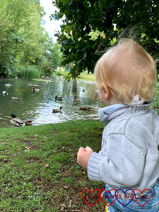 Thomas standing looking at the ducks