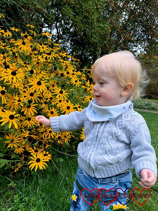 Thomas looking at yellow flowers at Herschel Park