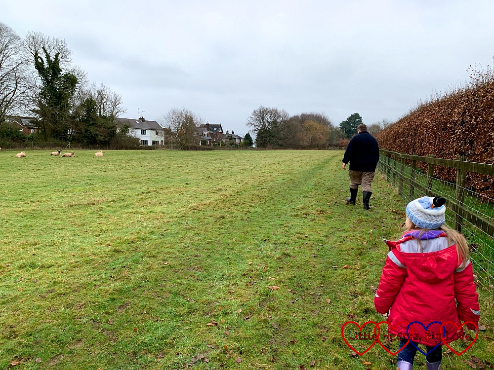 Daddy and Sophie walking down one side of a field with sheep grazing on the other side