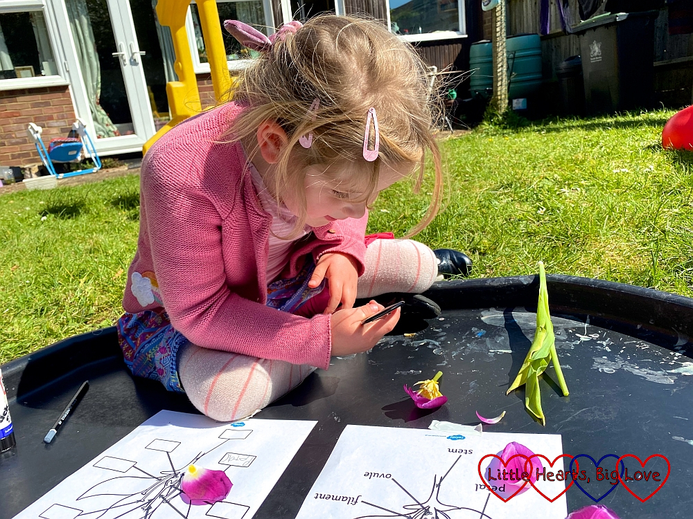 Sophie looking at a flower through a magnifying glass while trying to identify parts of a flower