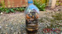 A wormery made from a plastic bottle with alternating layers of sharp sand and compost inside