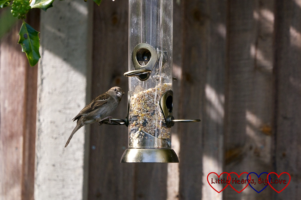 A bird on the bird feeder
