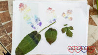 Three leaves on a piece of paper with a rainbow print of each leaf above it