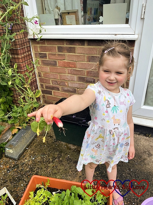 Sophie holding one of the radishes she picked from the garden
