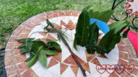 A leaf necklace, grass-heart wand and a leaf crown on a garden table