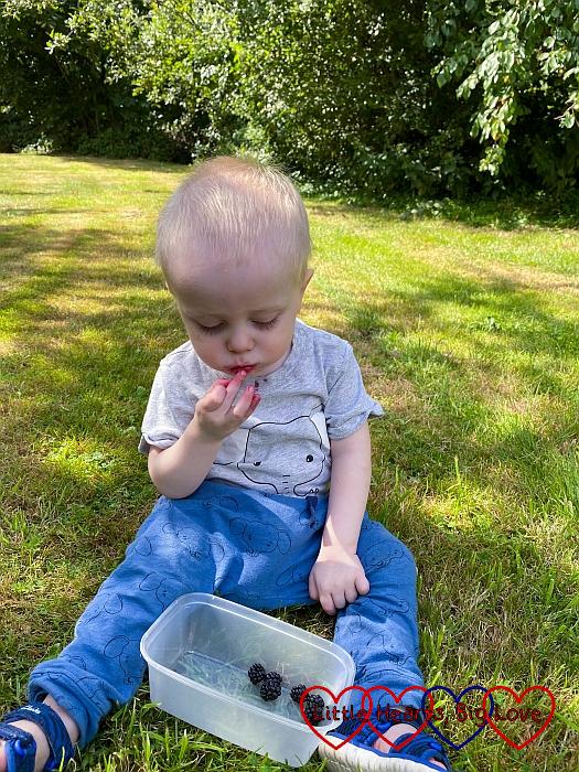 Thomas eating blackberries in Grandma's garden