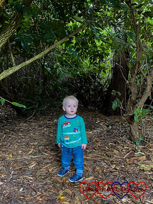 Thomas standing under the trees in Langley Park