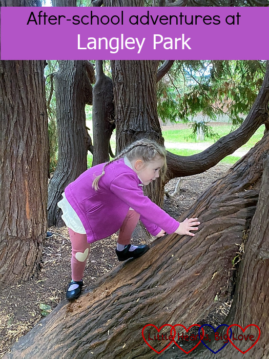 "Sophie climbing a cypress tree - ""After-school adventures at Langley Park"""