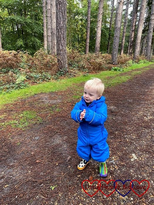 Thomas enjoying a walk in Black Park