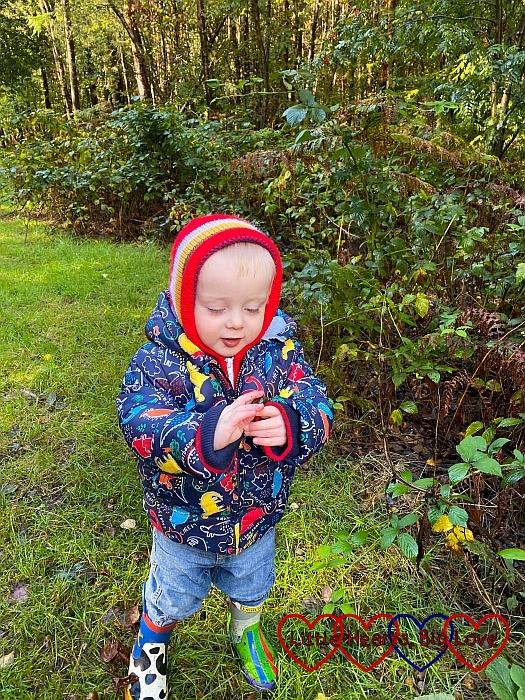 Thomas examining a leaf