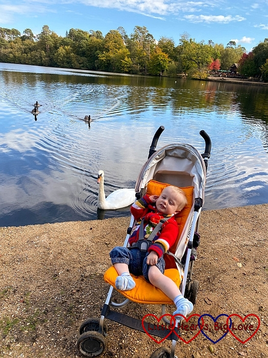 Thomas in his buggy in front of the lake at Black Park with a swan swimming past