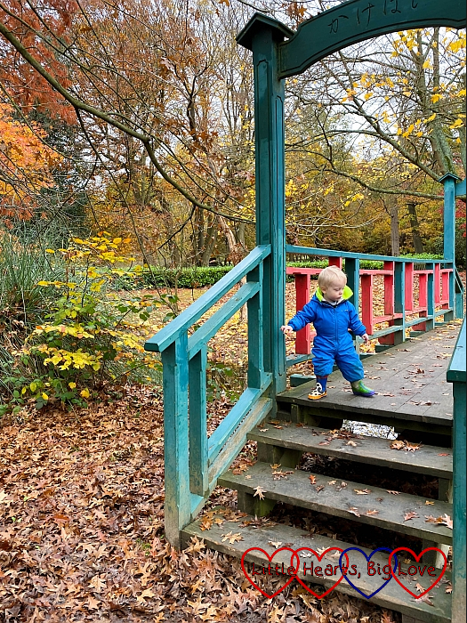 Thomas standing on the Japanese bridge in the arboretum at Langley Park with autumn trees surrounding him
