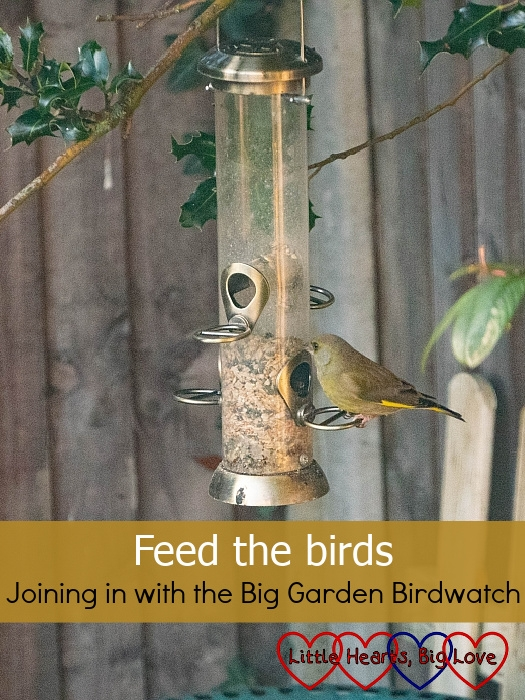 A greenfinch on the seed feeder