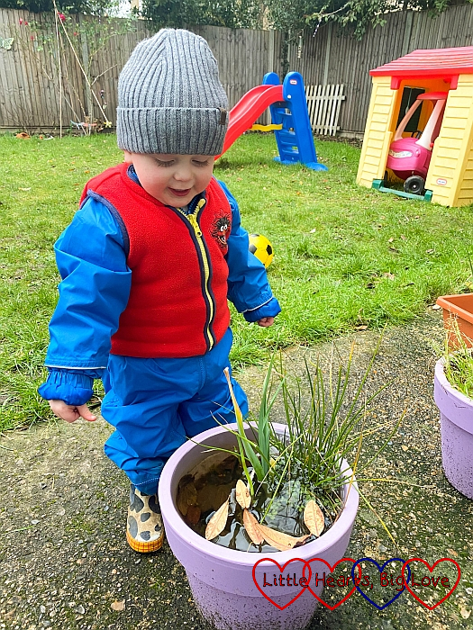 Thomas floating leaves in one of the plant pots