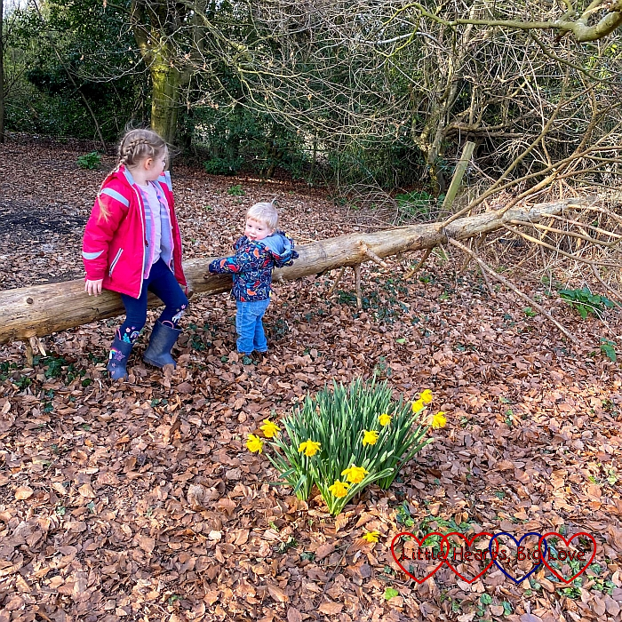 Sophie and Thomas sitting on a fallen tree in the woods with daffodils in the foreground