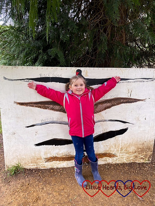 Sophie stretching out her arms against a board showing the wingspans of a black swan, Canada goose, herring gull, cormorant and pheasant