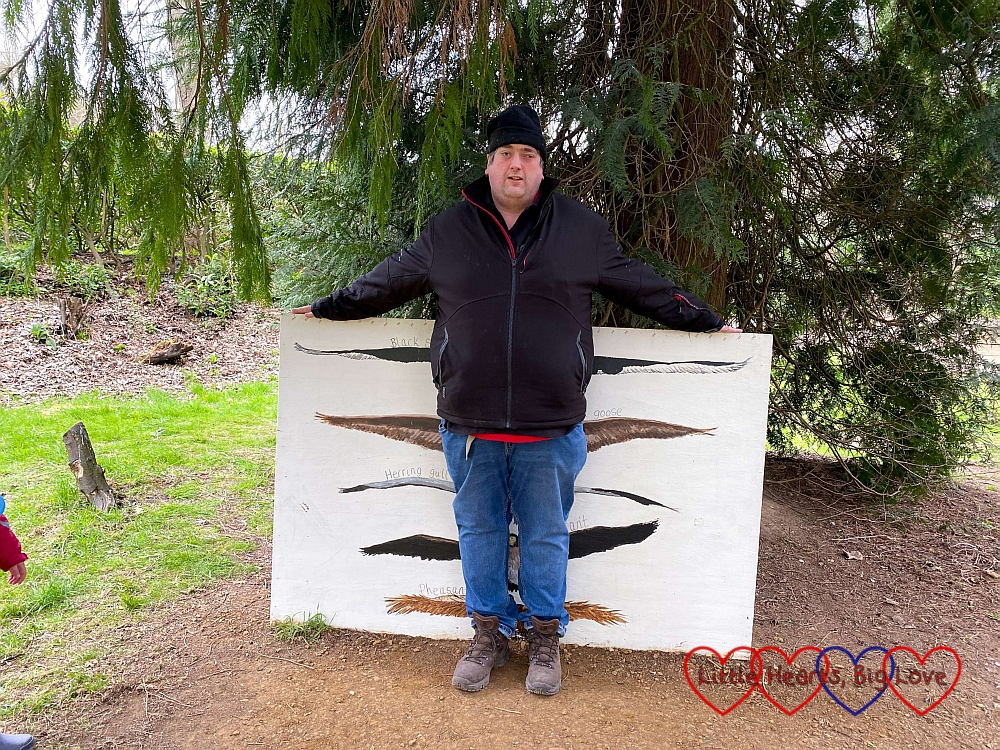 Daddy stretching out his arms against a board showing the wingspans of a black swan, Canada goose, herring gull, cormorant and pheasant