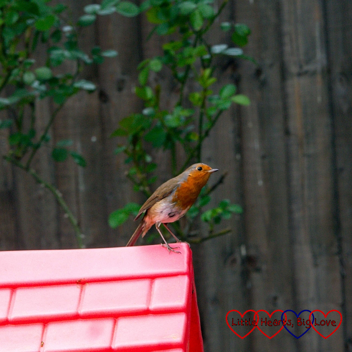 A robin on the children's play house