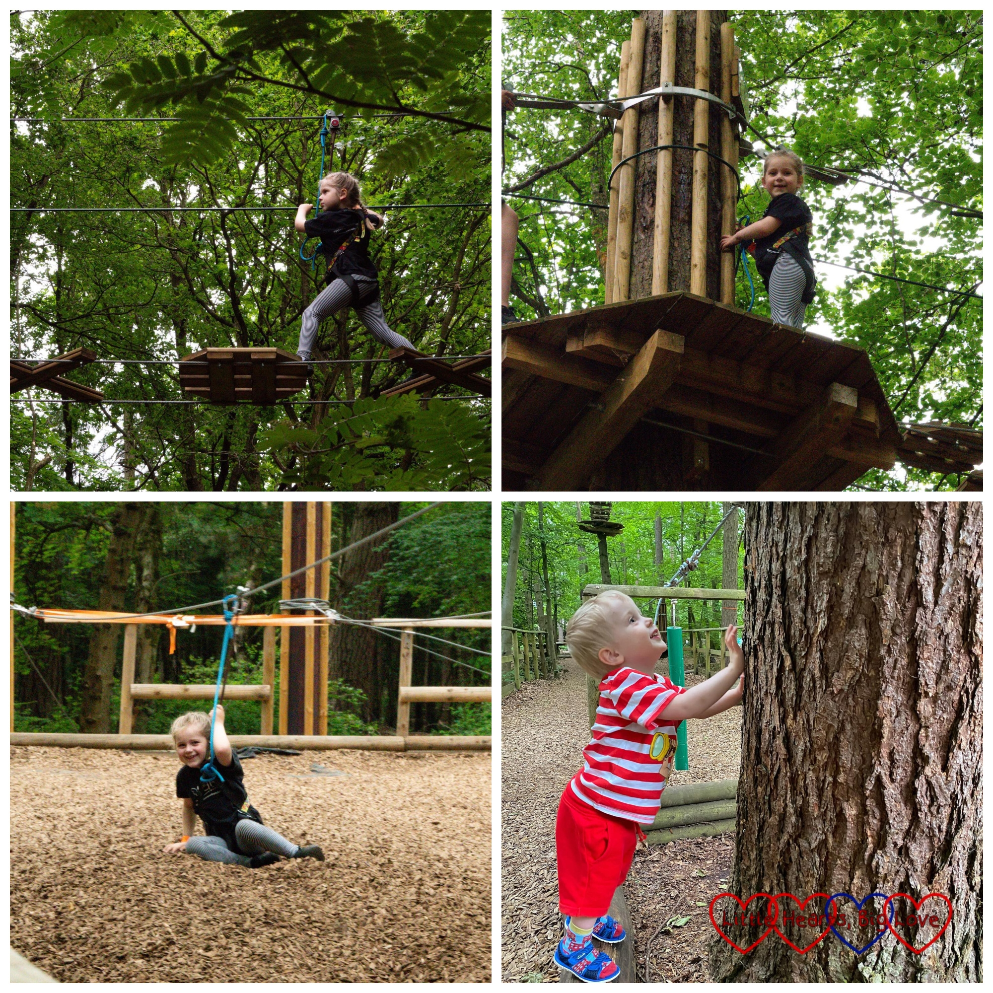 Sophie up in the trees at Go Ape; Sophie after coming down the zip wire; Thomas looking at a tree
