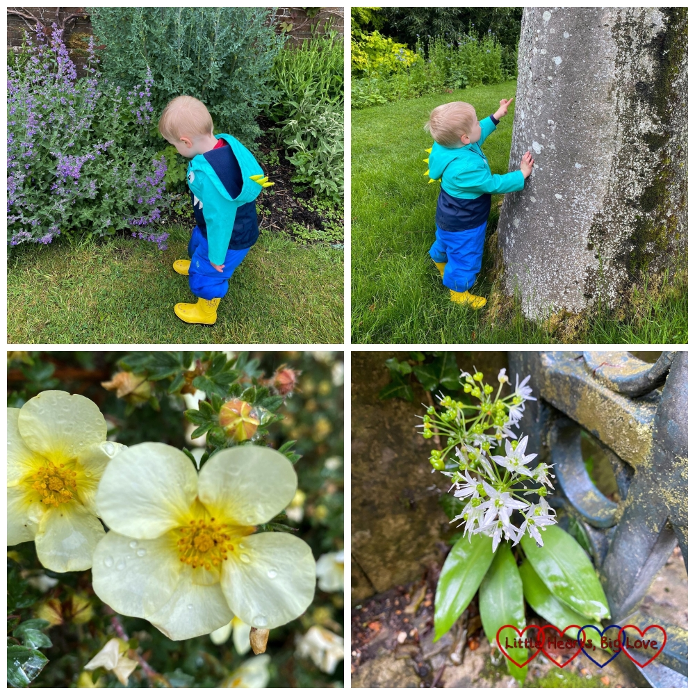 Thomas looking at flowers; Thomas looking at a tree; pale yellow flowers and white flowers