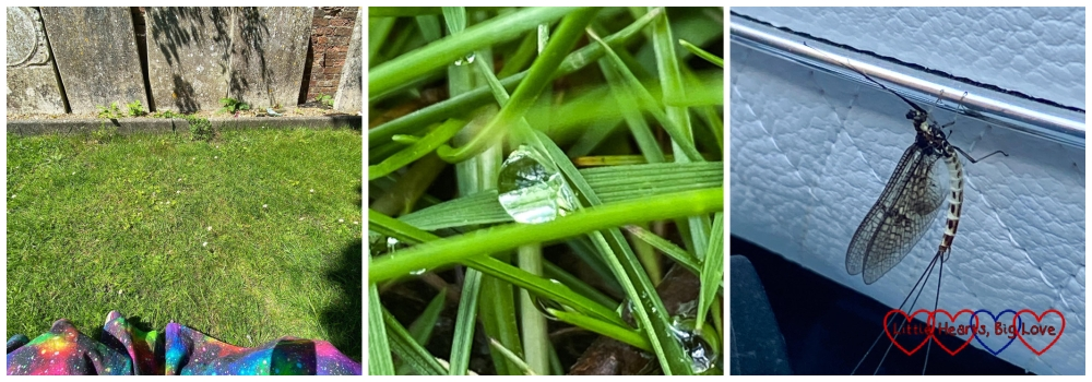My dad's resting place; a dew drop in the grass; a mayfly on my great-nephew's buggy