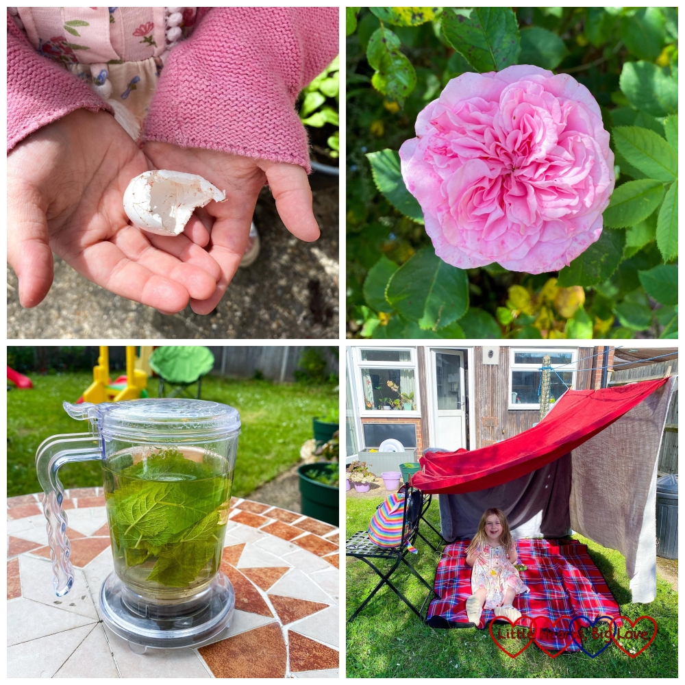 Sophie holding a white bird's egg; a pink Pretty Jessica rose; lemon balm leaves infusing in hot water; Sophie in her den