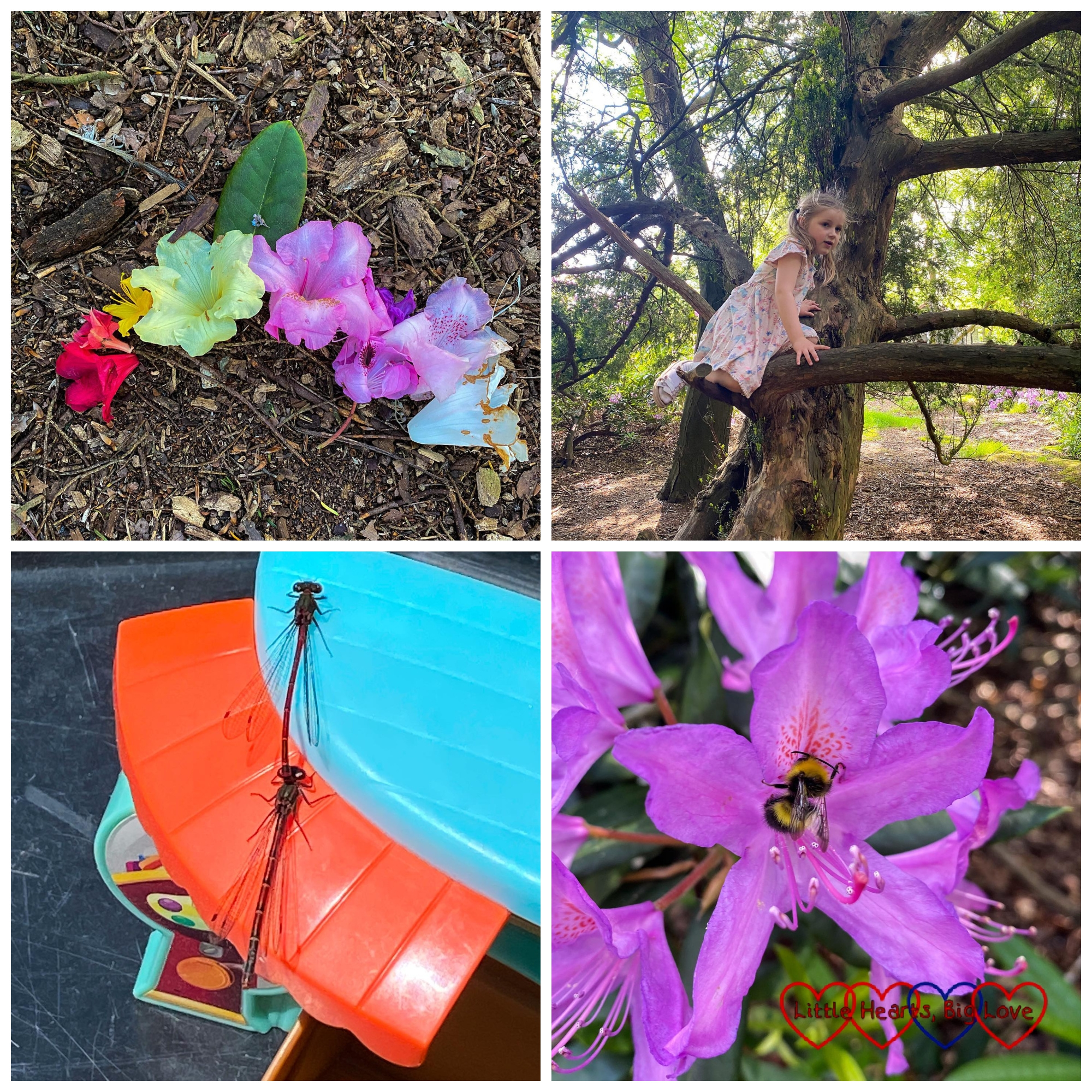 A rainbow of rhododendron flowers; Sophie climbing a tree; two damselflies on top of a plastic toy; a bee in a purple rhododendron flower