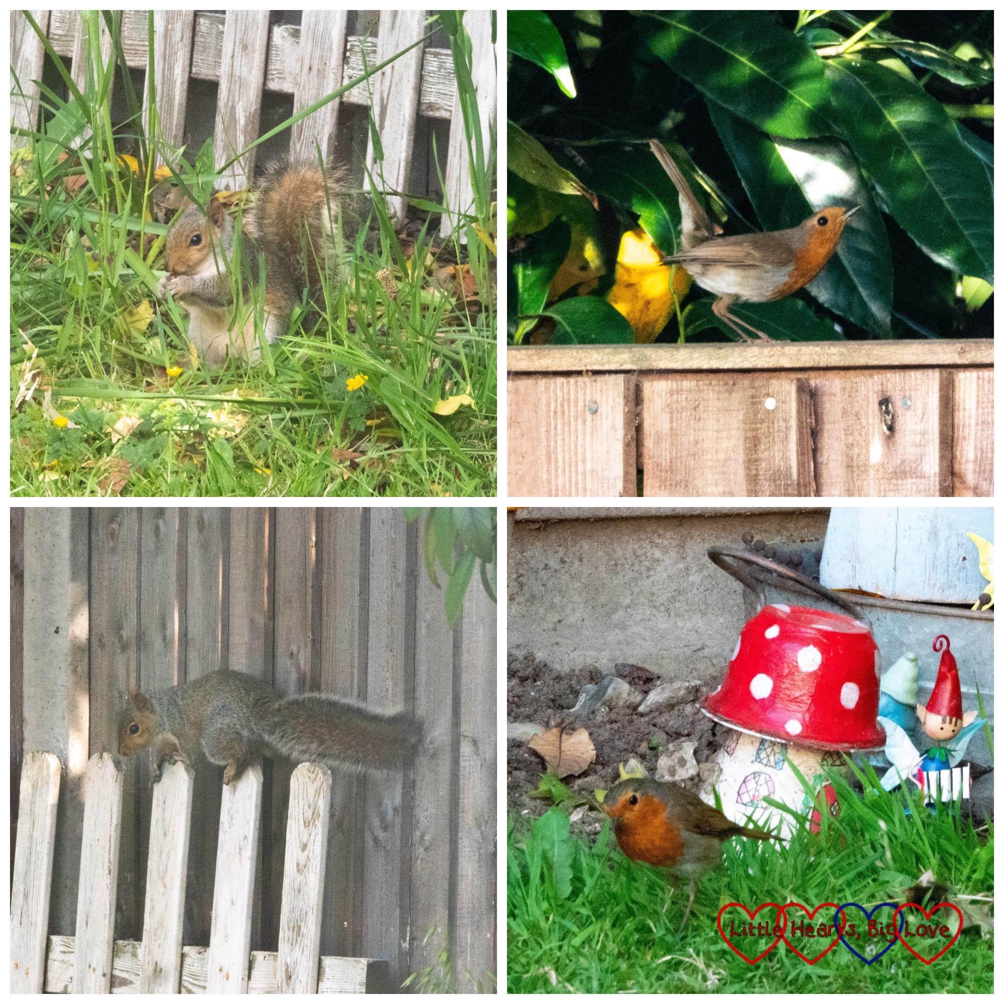 A squirrel and a robin in the garden
