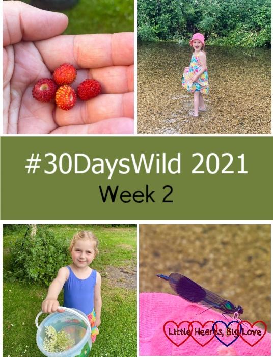 "A handful of wild strawberries; Sophie paddling in the stream; Sophie collecting elderflowers; a banded demoiselle on Sophie's hat - ""#30DaysWild 2021 - Week 2"""