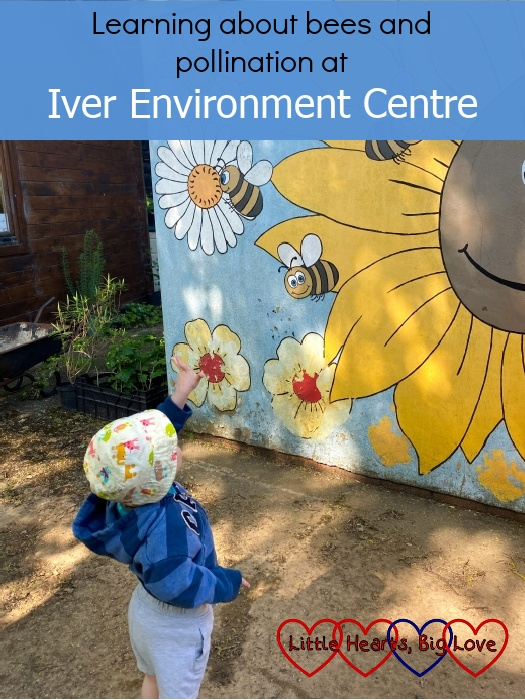 """Thomas looking at a painted wall with pictures of flowers and three bees – """"Learning about bees and pollination at Iver Environment Centre"""""""
