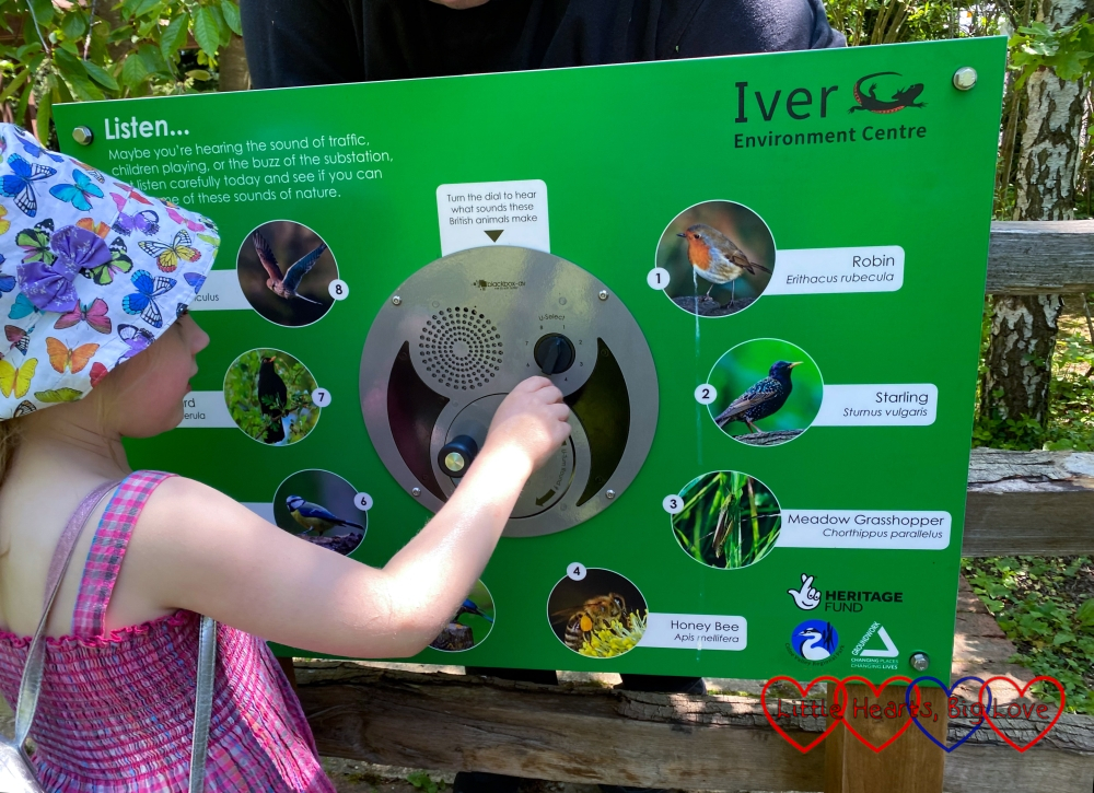 Sophie turning a dial on a board to listen to different animal sounds