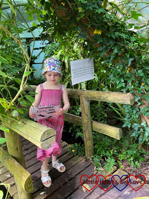 Sophie on a bridge in the rainforest area at Iver Environment Centre looking at one of the clues for her crossword