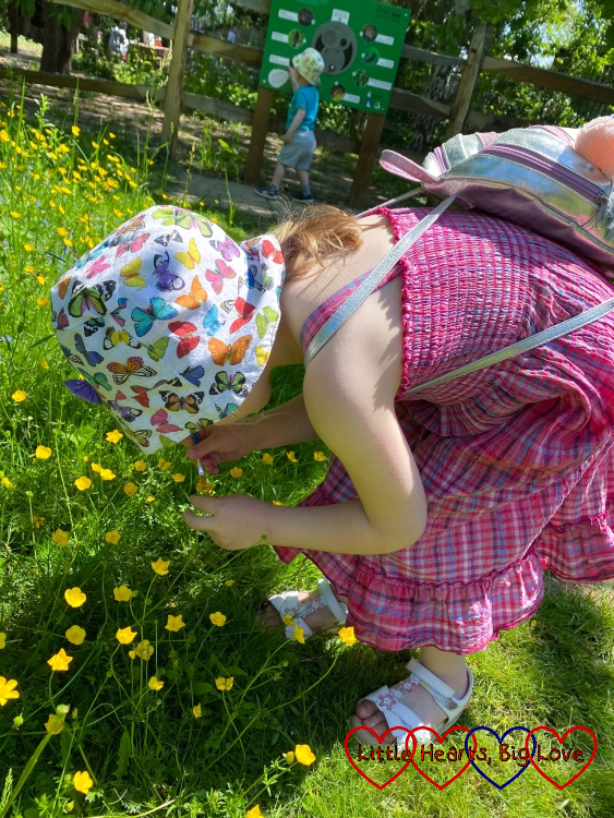 Sophie brushing a buttercup with a paintbrush to collect some pollen