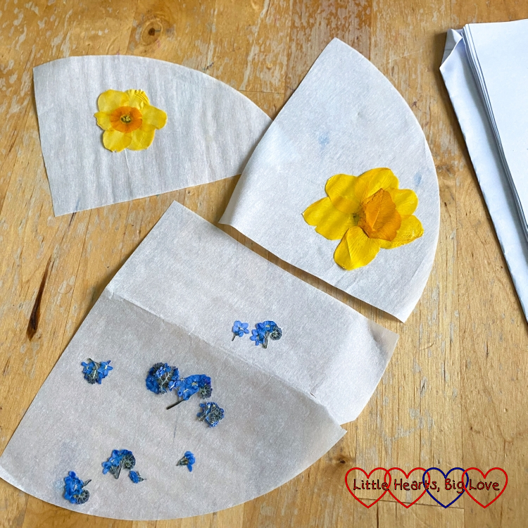 Pressed daffodils and forget-me-nots