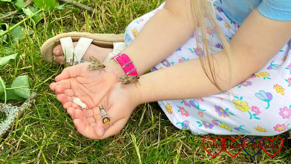 Sophie holding a buff tip moth, a white ermine moth and two dark arches moths