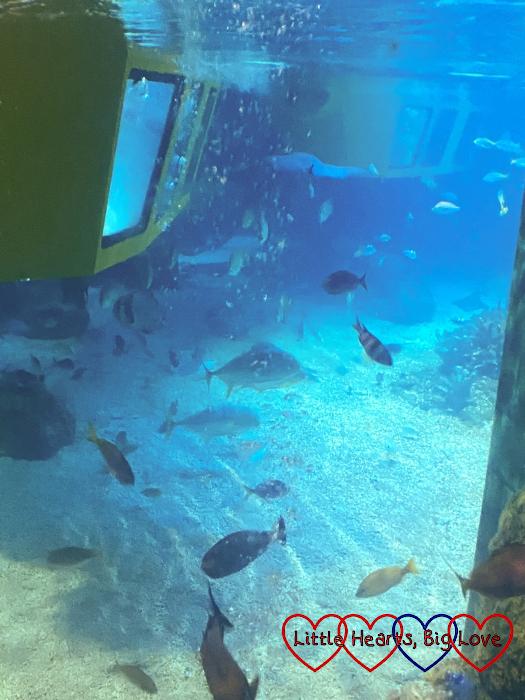 Fish swimming around a yellow submarine at the LEGO City Deep Sea Adventure