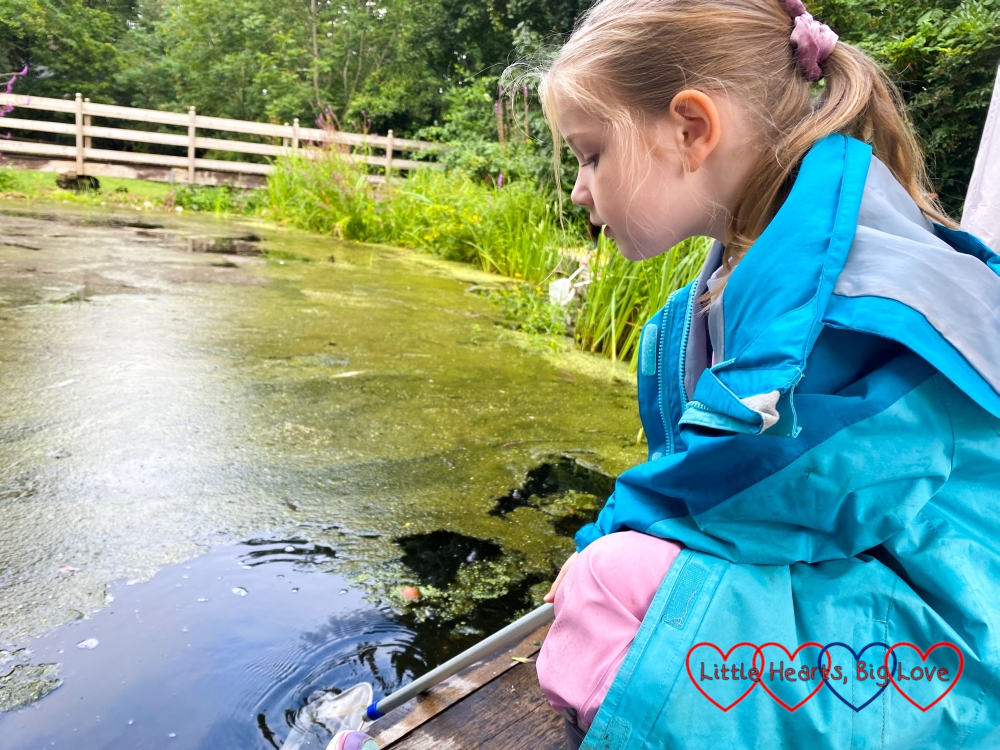 Sophie doing some pond dipping