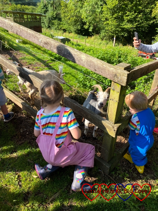 Sophie and Thomas feeding the goats on the feed run at Coombe Mill